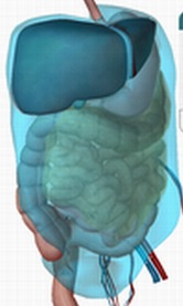 オステオパシーでいう腹膜